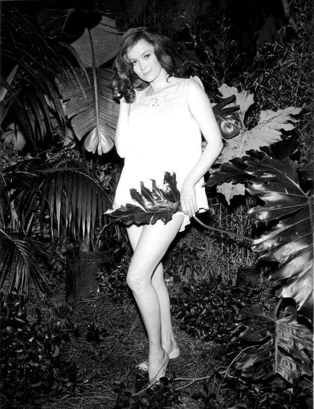 1941 quinn o'hara bushes