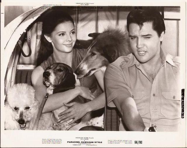 Elvis Presley Sexy Julie Parrish 3 Dogs PARADISE HAWAIIAN STYLE 1966