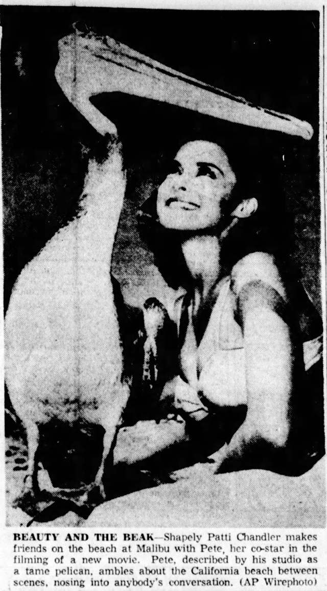 Patti Chandler Lubbock_Avalanche_Journal_Mon__Apr_26__1965_